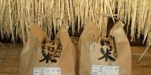 阿蘇の湧水で育ったお米